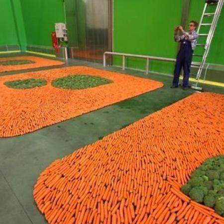 zakład przetwórstwa warzywnego greengrow4