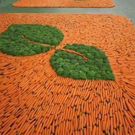 zakład przetwórstwa warzywnego greengrow6